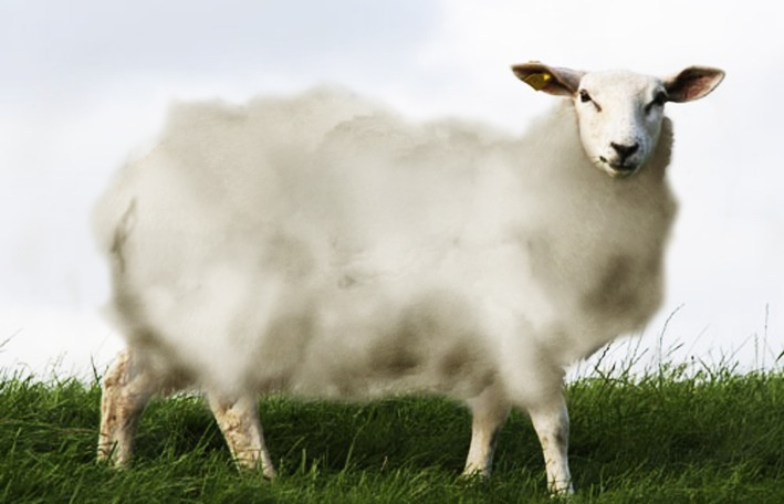 cloud sheep 001