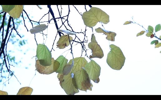 Screen Shot 2014-12-08 at 02.04.47