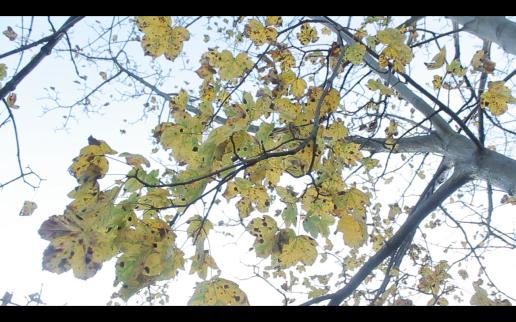Screen Shot 2014-12-08 at 02.10.16