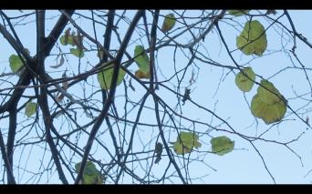 Screen Shot 2014-12-08 at 02.17.10