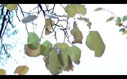 Screen Shot 2014-12-08 at 02.19.51