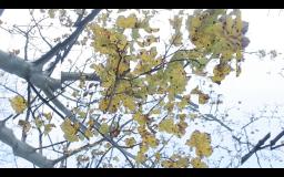 Screen Shot 2014-12-08 at 02.20.16