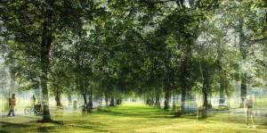 tree walk collage 002